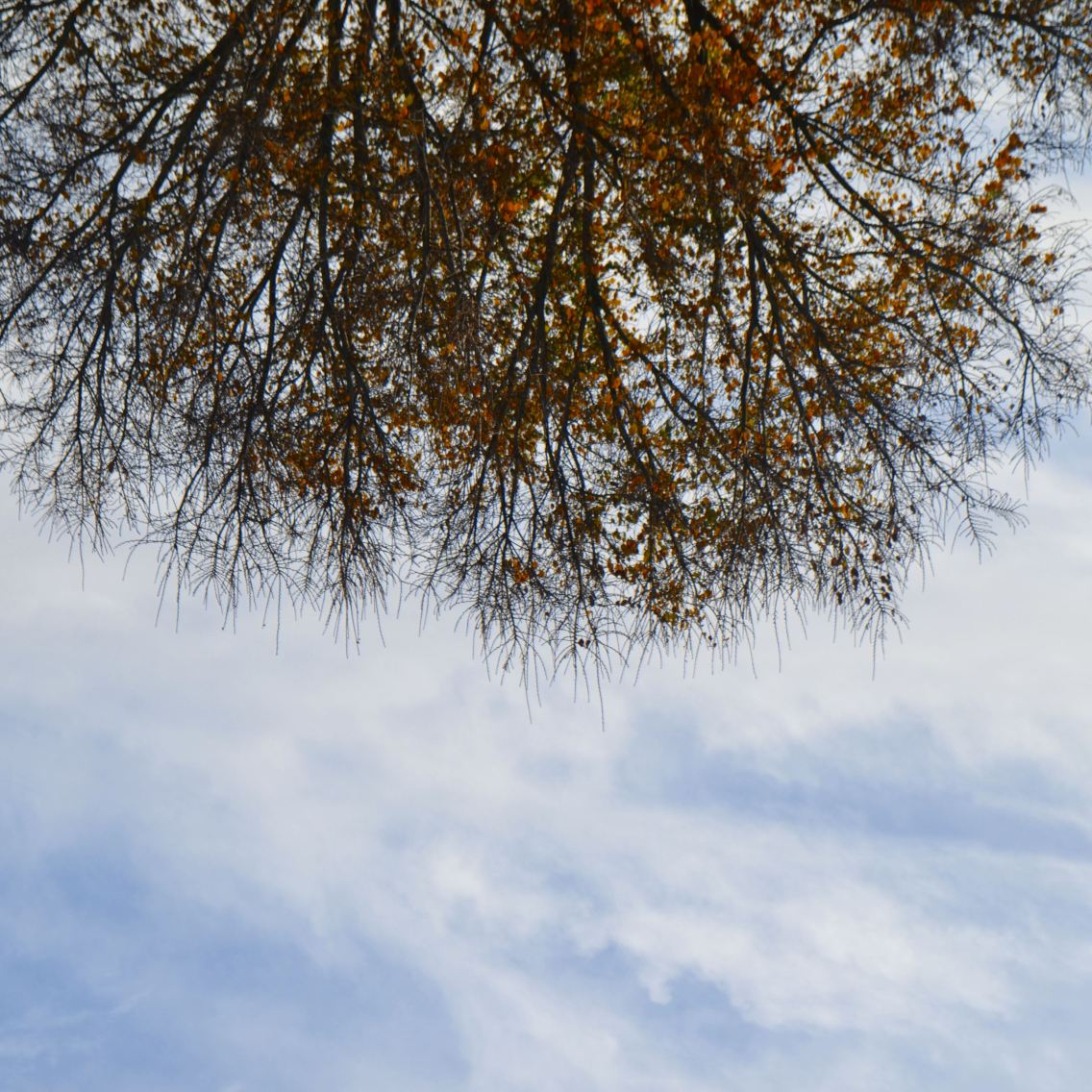 Árvoreu, lá vou eu, ser árvore.